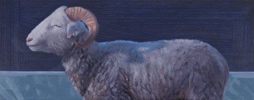 Whiteshirehorn schaap