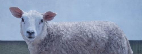 Jong schaap