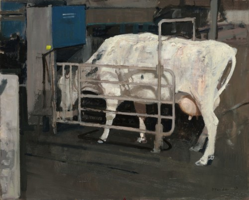 Koe bij voerautomaat