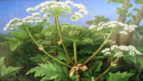 Schermbloemen