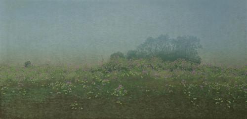 1996-III ( in optie)