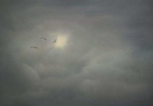 Drie meeuwen in de lucht