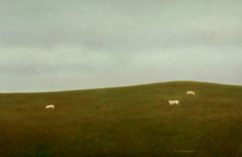 Drie schapen in het Lake District, The Skiddaw