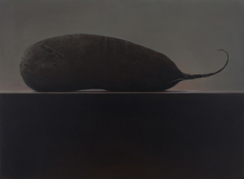 Zwarte rettich- wortel