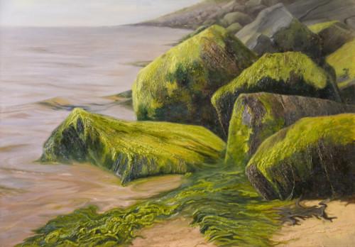 Zeewier op de Zeewering bij Vlieland