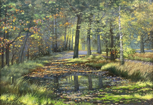 Plas water in het bos
